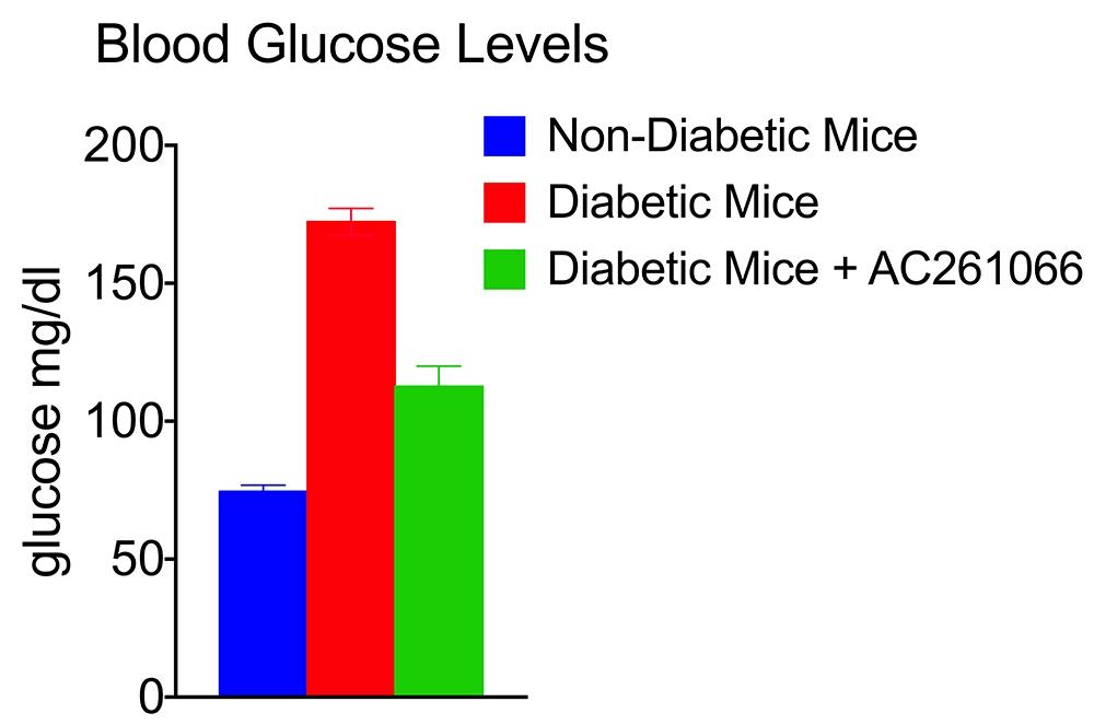 Gudas Lab; Investigational drug AC261066 treats mice with diabetes