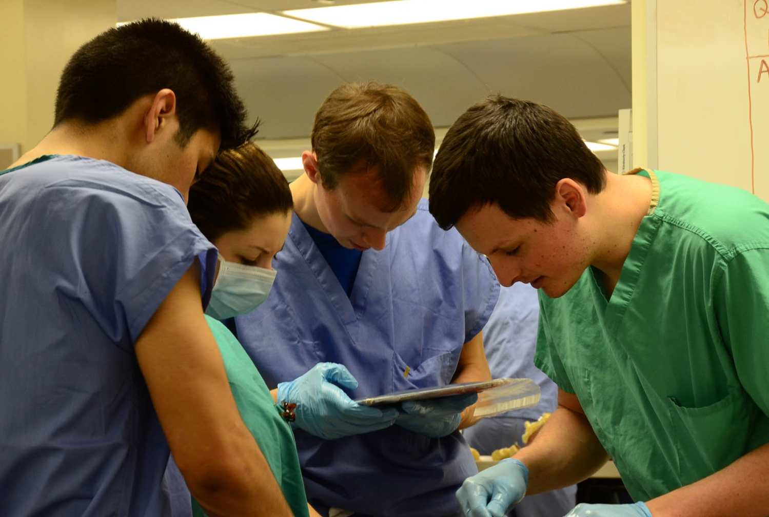 Weill Cornell\'s iPad Revolution Reaches Gross Anatomy Lab | Newsroom ...