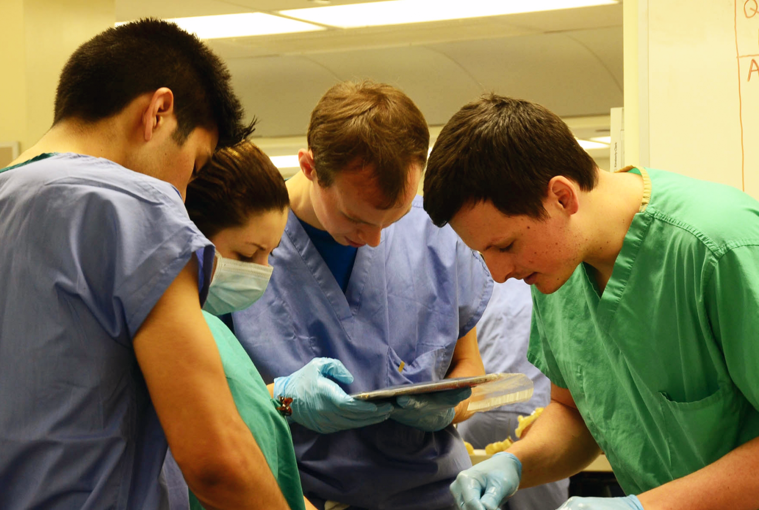 a group of medical professionals learning anatomy