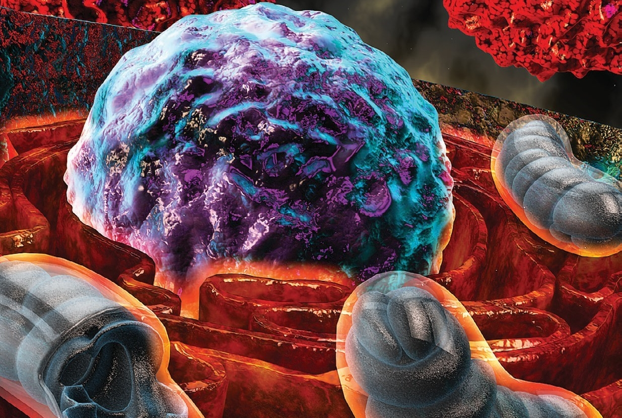 "Stressful Situation: A scientific illustration shows how T-cells that are exposed to harsh conditions inside a tumor experience endoplasmic reticulum (ER) stress, depicted by ""burning"" ER (orange) surrounding the nucleus (purple and turquoise). Mitochondria are seen in bluish gray, with cancer cells in red. Credit: Ella Maru Studio"