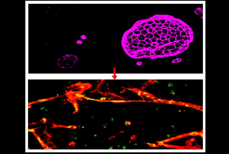 microscopic image