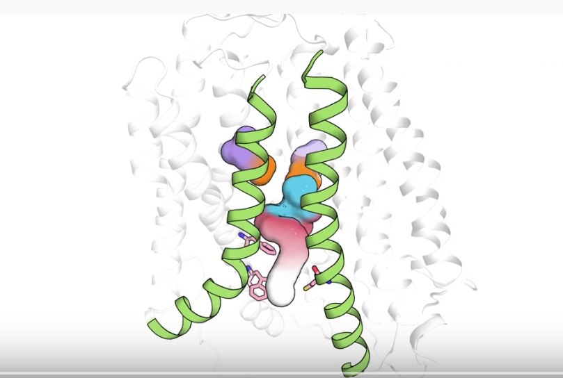molecular image showing molecule engaging membrane protein