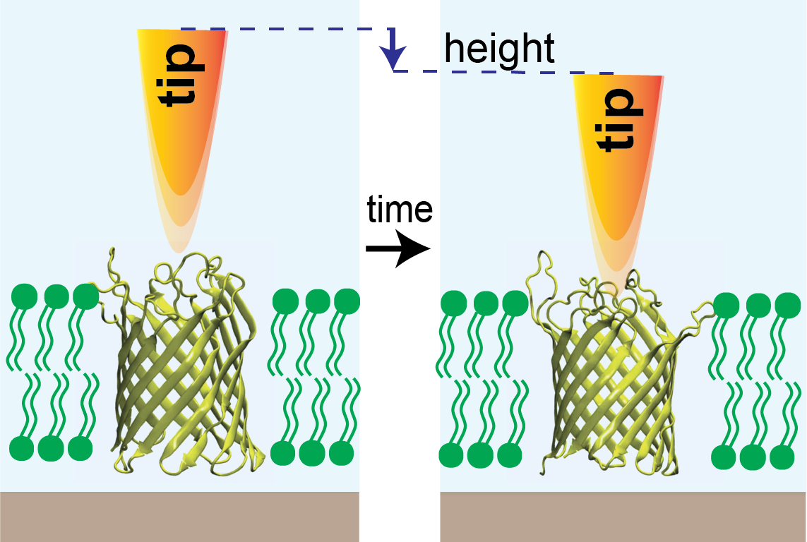 diagram of microscope tip and ion channel in membrane