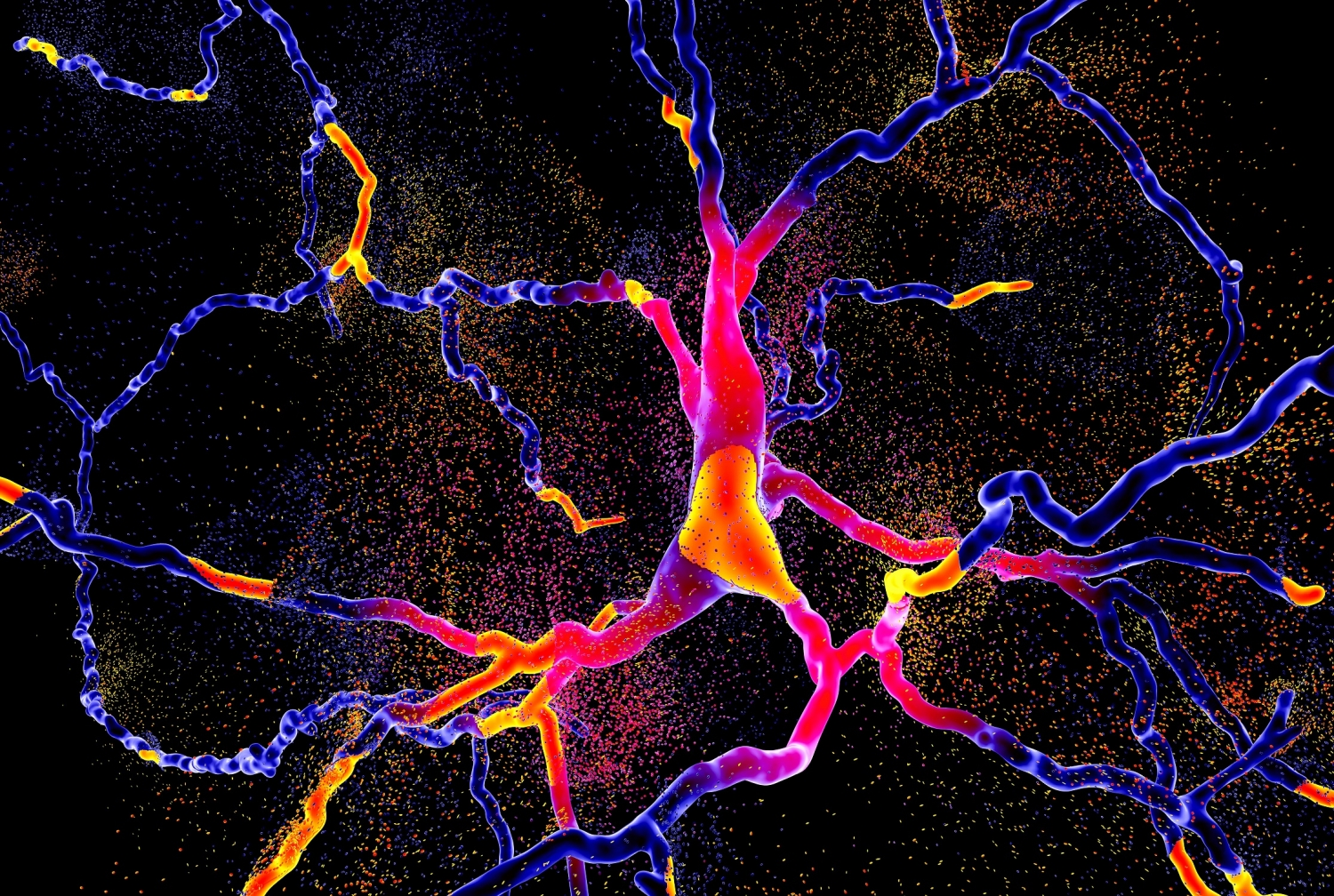 colorful brainneurond  illustration