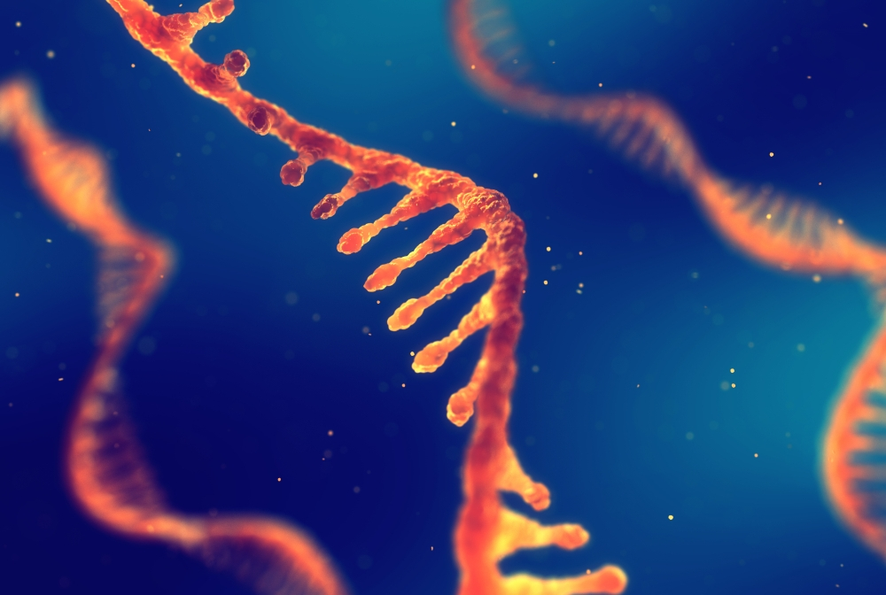Knowing Exactly What Genes Are Saying – And Where | Newsroom