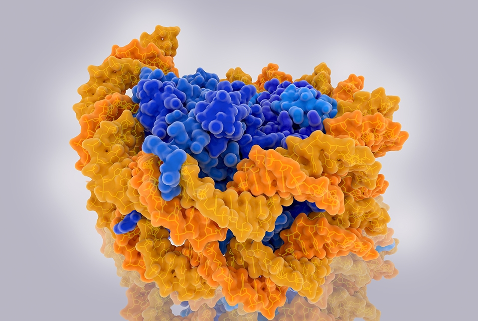 yellow structure representing DNA wrapped around blue structure representing histones