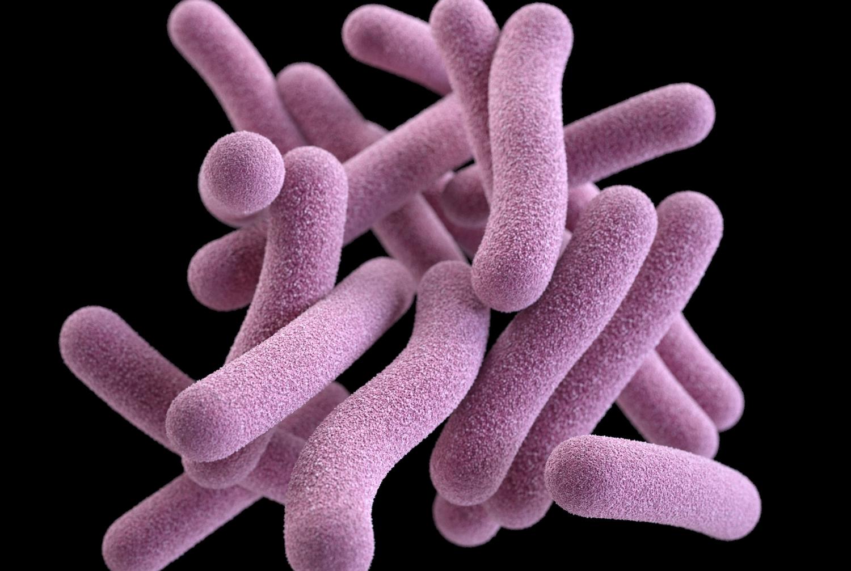 Tuberculosis bacteria. Credit: CDC