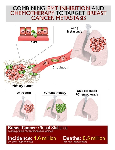 cancer cells in breast tumors