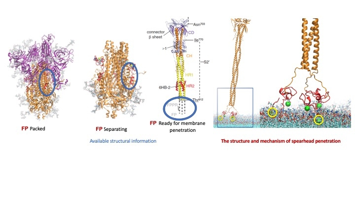 an image sars-cov2 protein